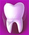 человеческий зуб