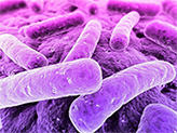 бактерии под микроскопом