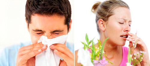 насморк и аллергический ринит