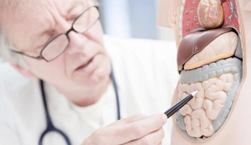 врач с макетом желудочно кишечного тракта