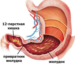 желудок и 12-перстная кишка