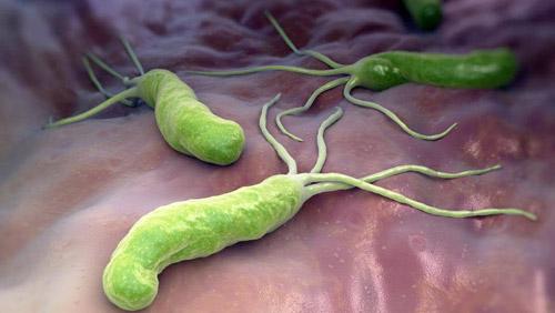 бактерии на слизистой желудка