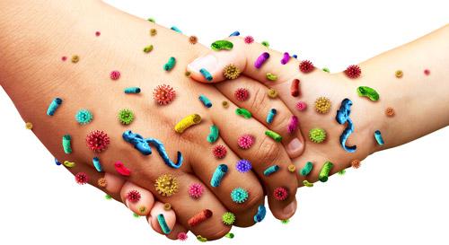 передача бактерий контактным путем