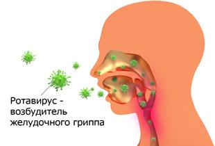 Возбудитель желудочного гриппа - ротавирус