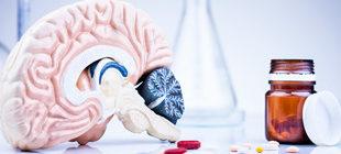 макет мозга в разрезе