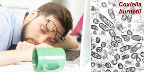 синдром хронической усталости и вирус Coxiella burnetti