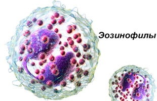 клетки эозинофилы