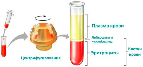 схема исследования крови в лаборатории
