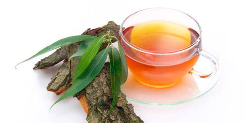 лечебный чай из коры ивы