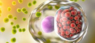 хламидии проникают в клетку
