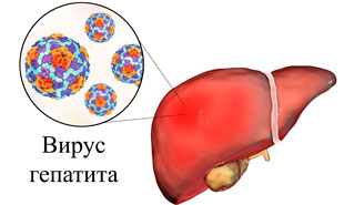 вирус гепатита в печени