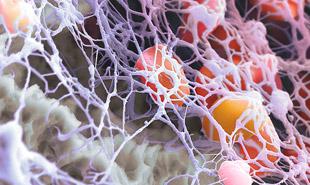 тромбоциты под микроскопом
