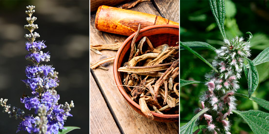 средства народной медицины: семена прутняка обыкновенного, корень девясила, пустырник