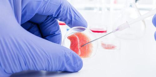 изучение стволовых клеток