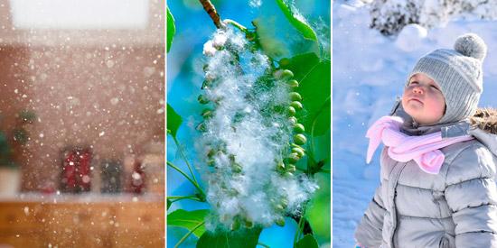 возбудители неинфекционного бронхита: пыль, пух, холодный воздух
