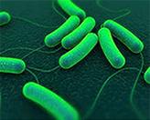 патогенные бактерии