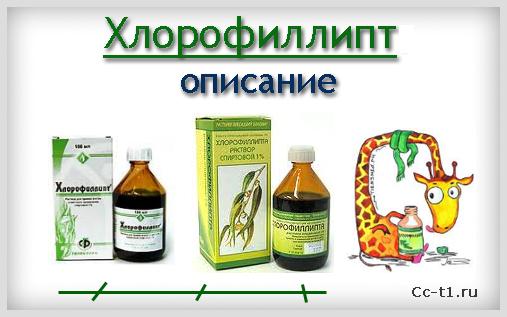 хлорофиллипт настойка инструкция